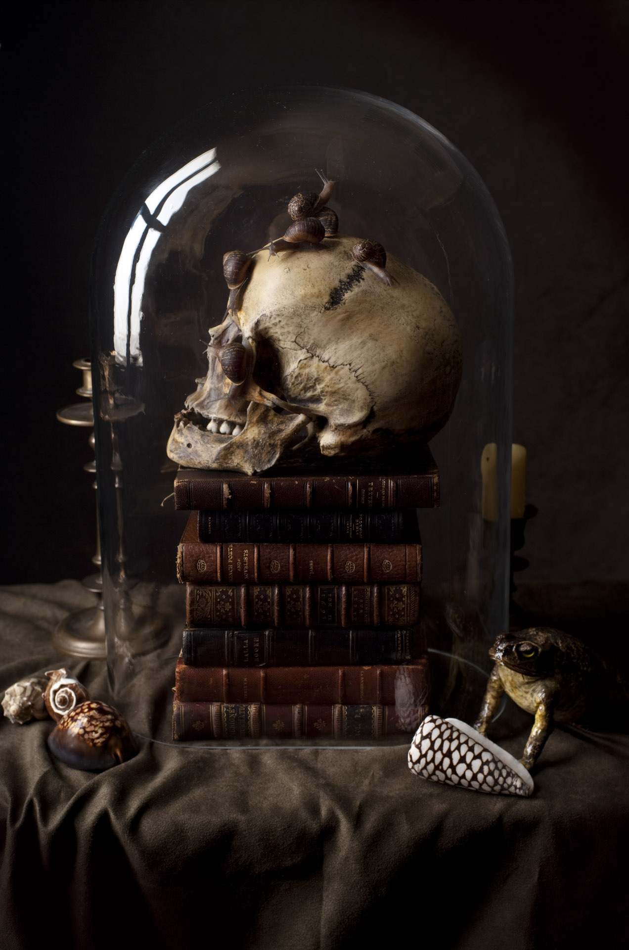 Vanitas dome with snails