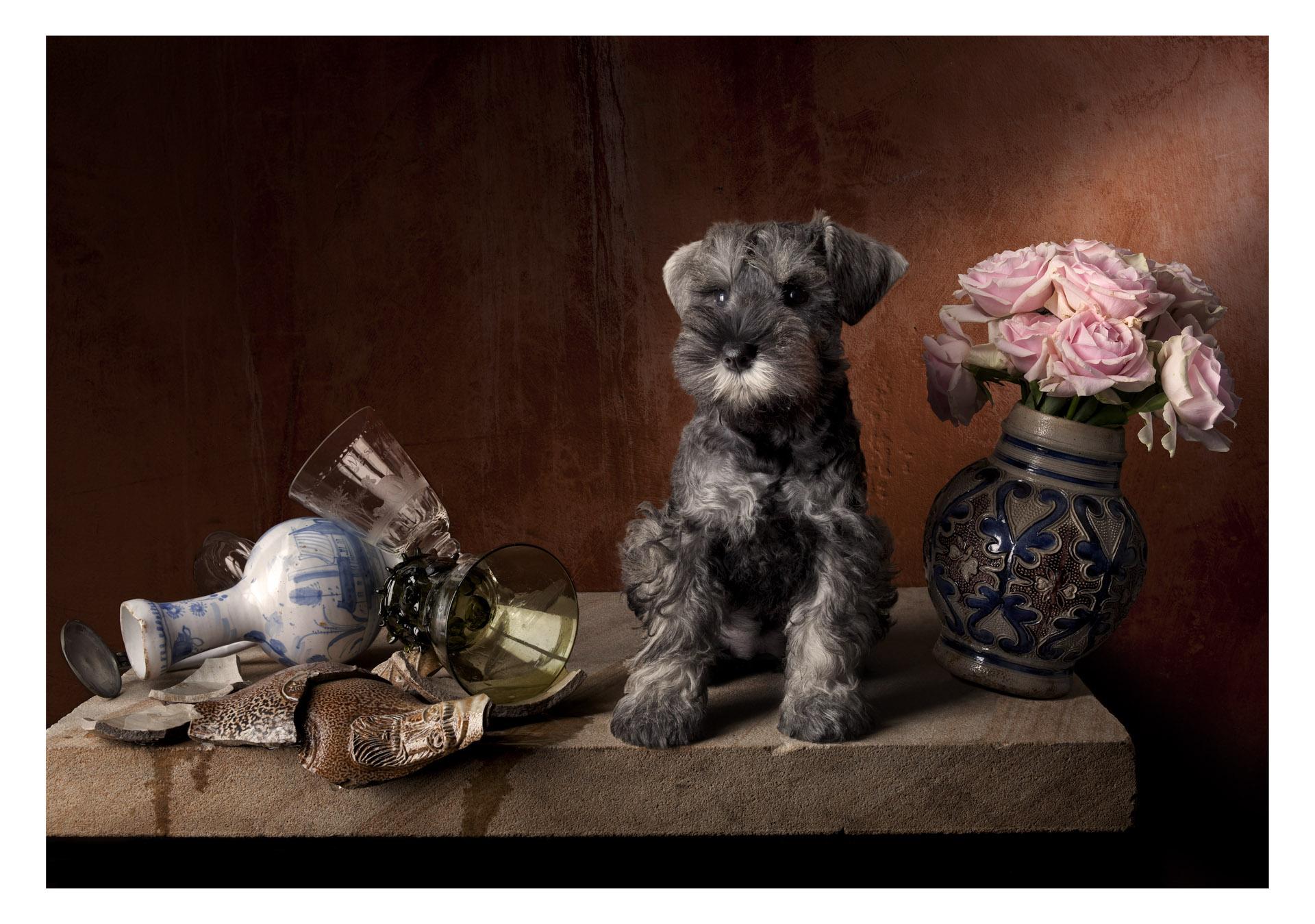 Still life with puppy